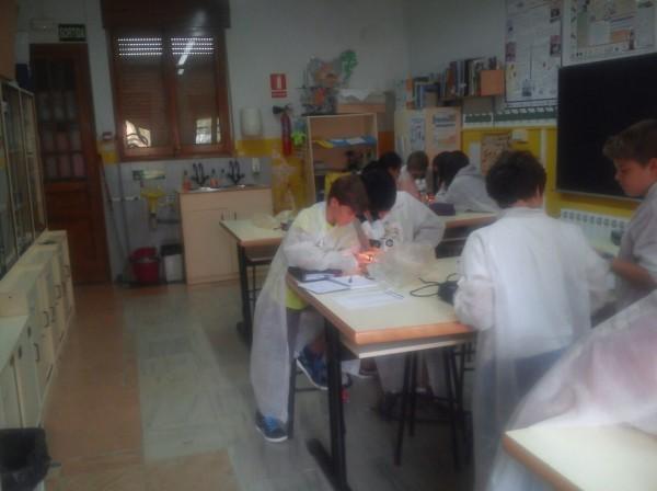 Hem començat al laboratori…