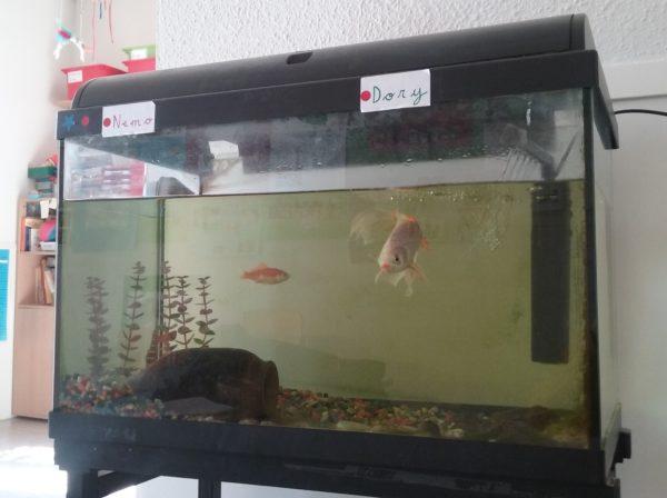 Ha arribat en Nemo!