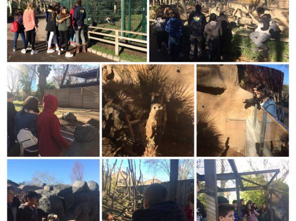 Les noies i nois de 2n d'ESO visitem el zoo de Barcelona