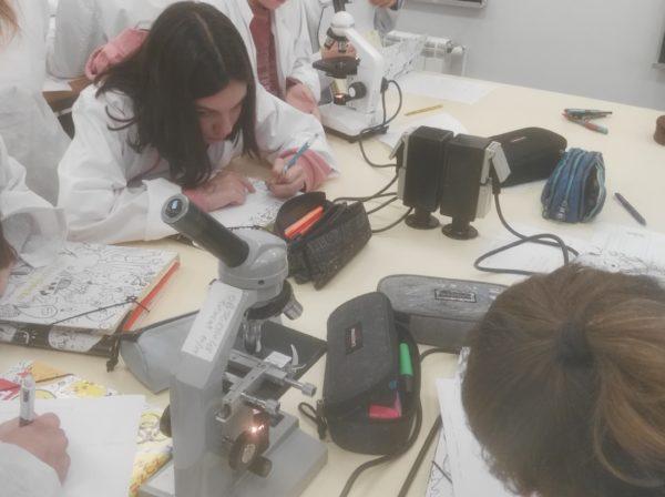 A 1r d'ESO experimentem amb el microscopi